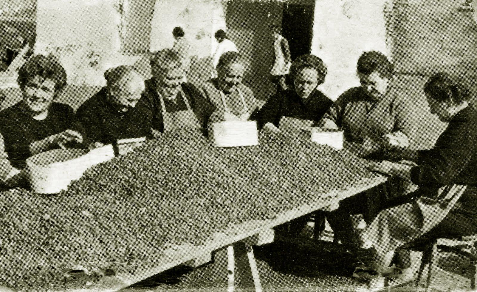 Alboraya y la horchata de chufa